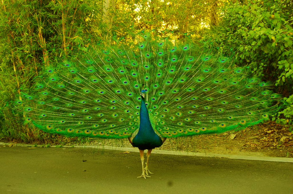 download exotic bird wallpaper which is under the birds wallpapers 1234x819