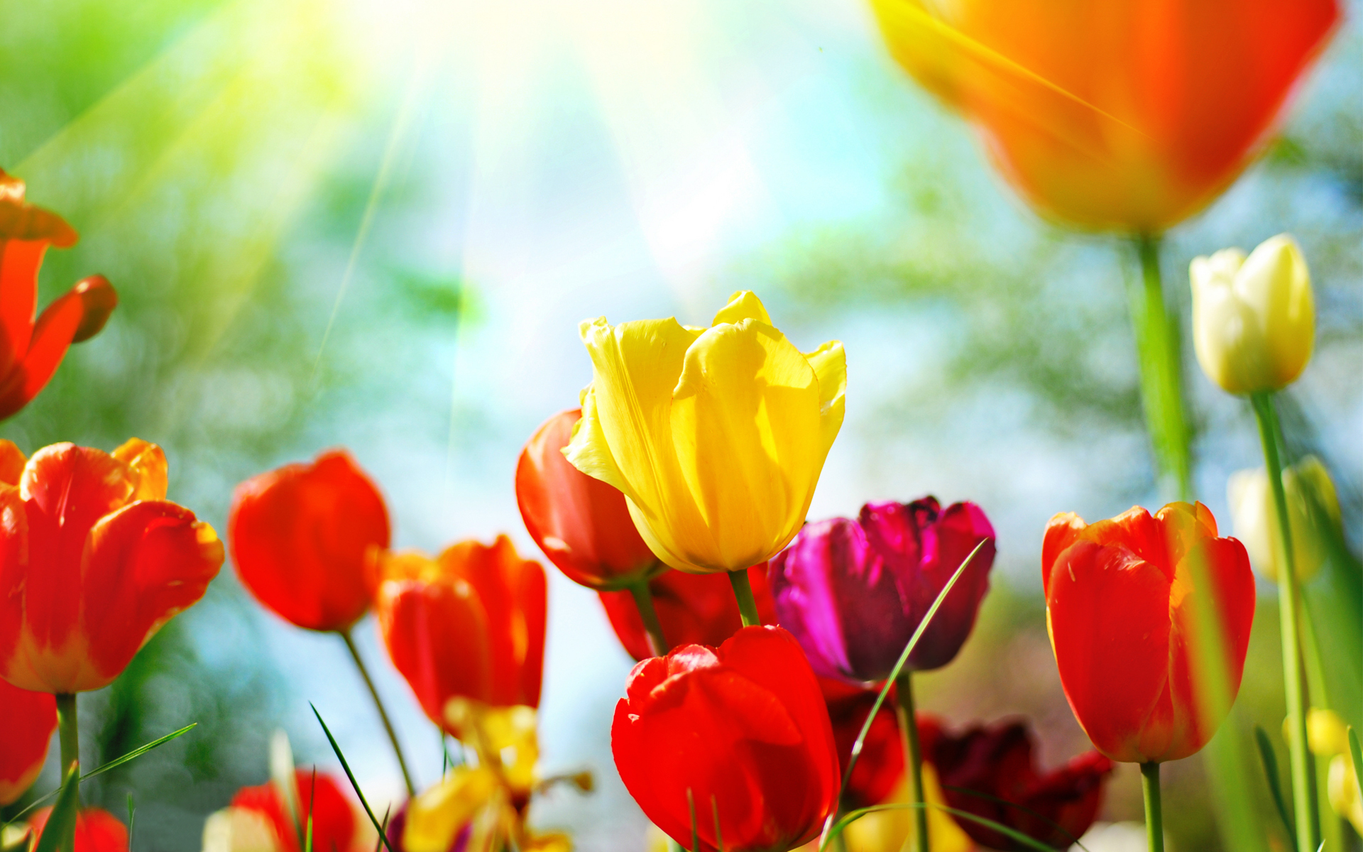 Spring background download 1920x1200