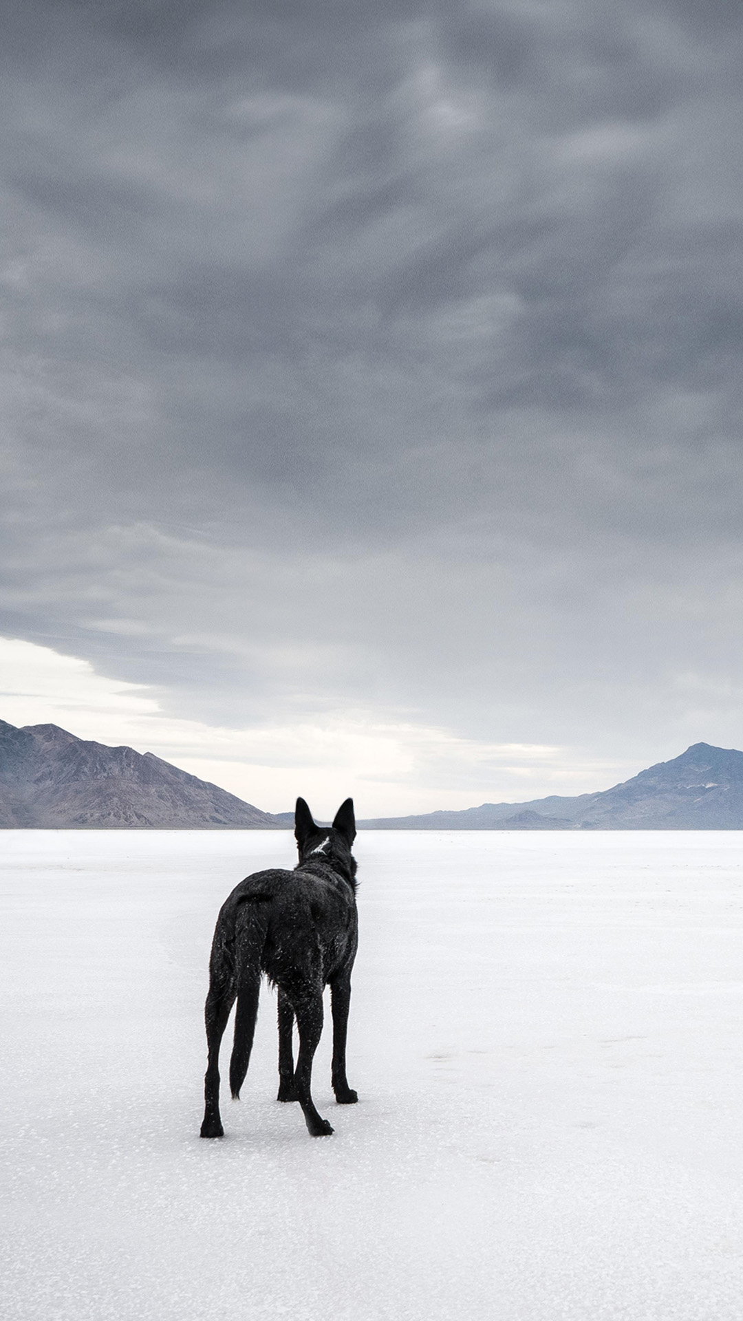 wolf 1080x1920 desktop wallpaper   android wallpapers download 1080x1920