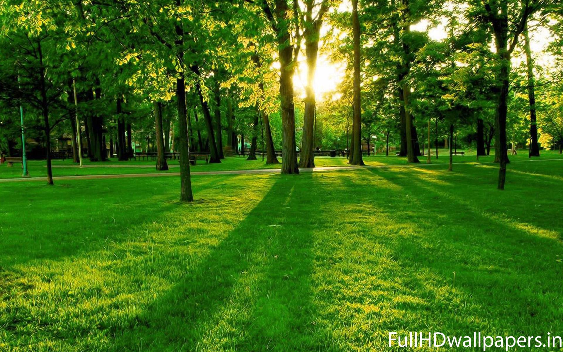 Beautiful Tree Wallpaper HD Freetopwallpapercom 1920x1200