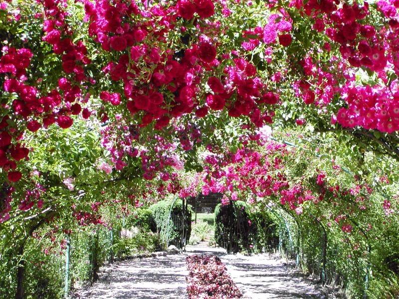 BRose Garden Wallpaper B