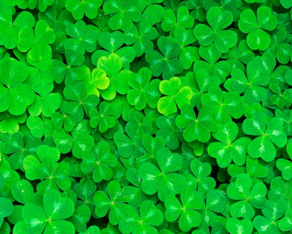 clover clovers 1280x1024 wallpaper Green Wallpapers Desktop 600x480