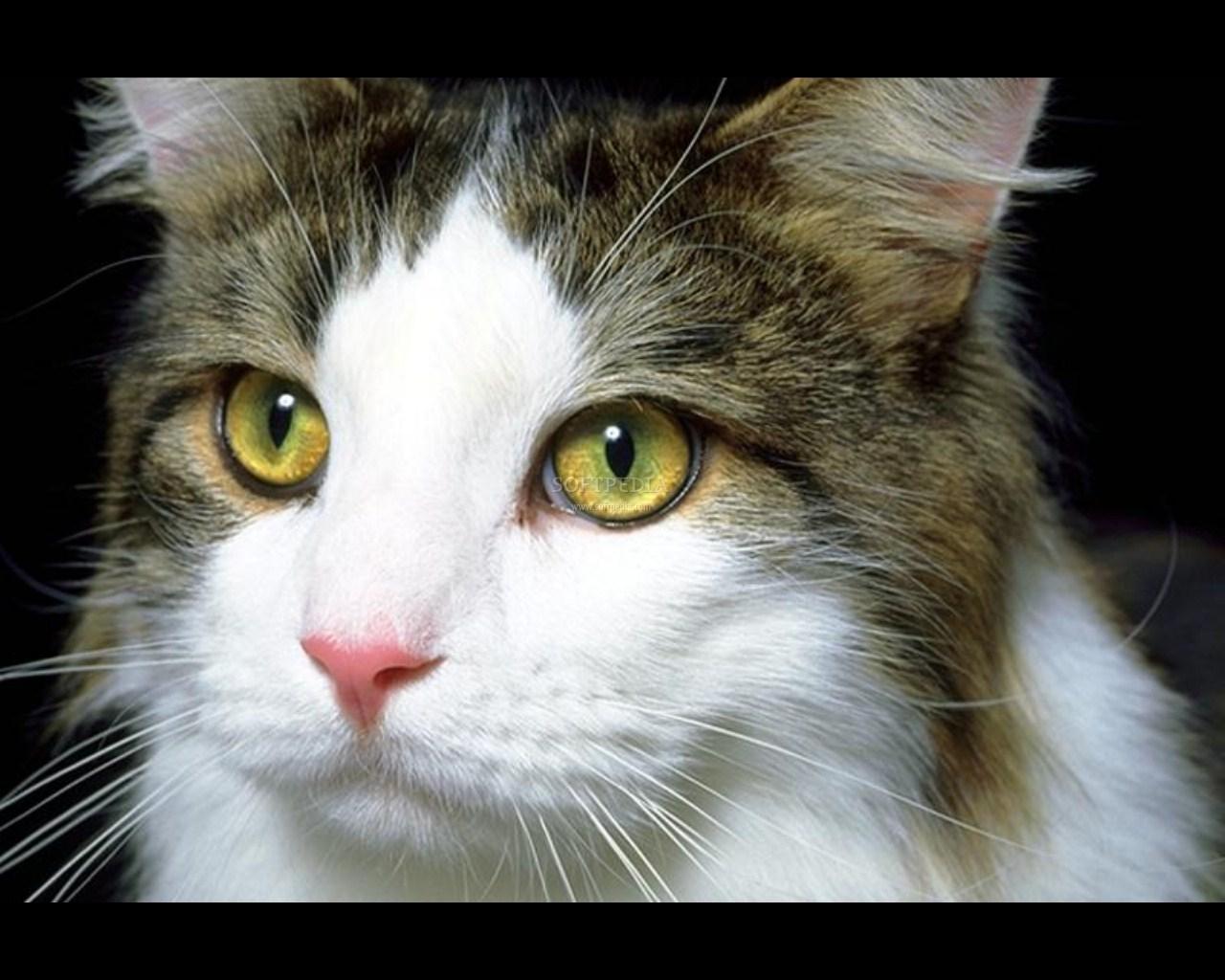 Cute Cat Screensavers Free