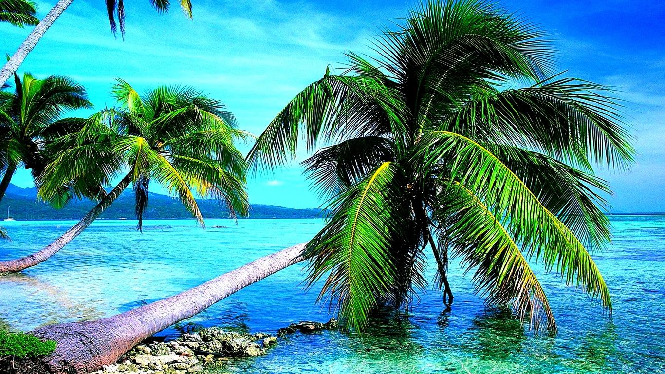 Hd Coconut Tree Seaside Landscape Nature Wallpaper Living: Palm Tree HD Wallpapers