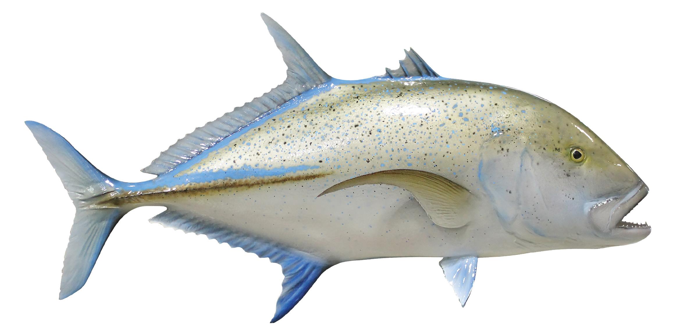 Bluefin Trevally Fish Replica mounted spearfish 2400x1145
