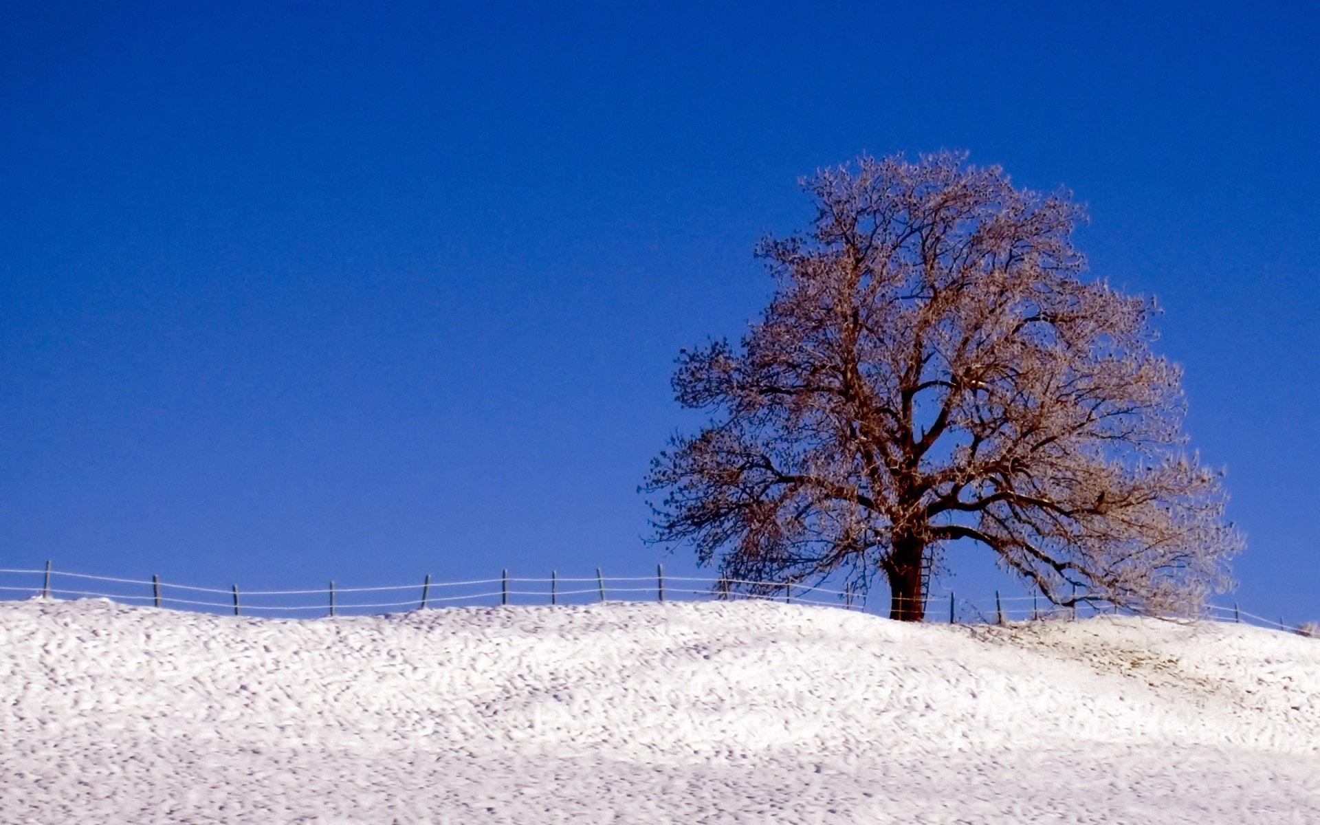 Widescreen Winter Scene Wallpaper - WallpaperSafari