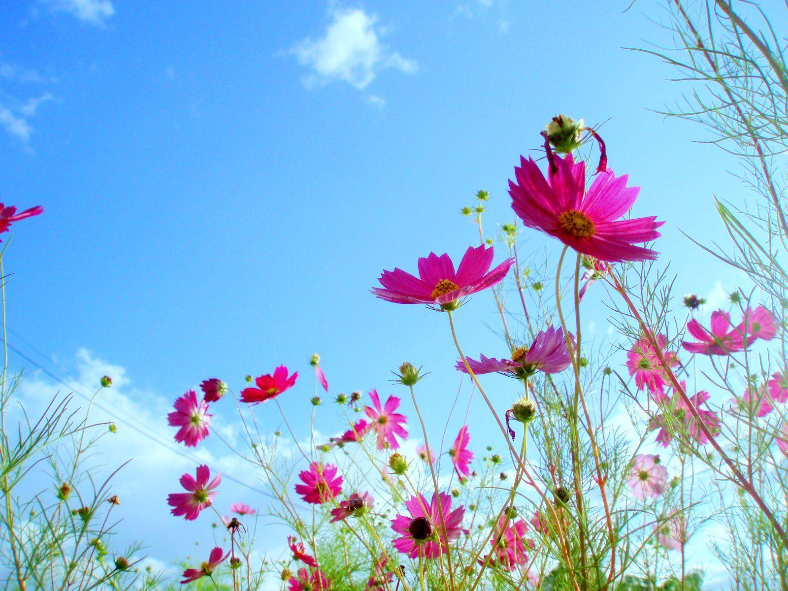 Flower Scenery Wallpaper Wallpapersafari