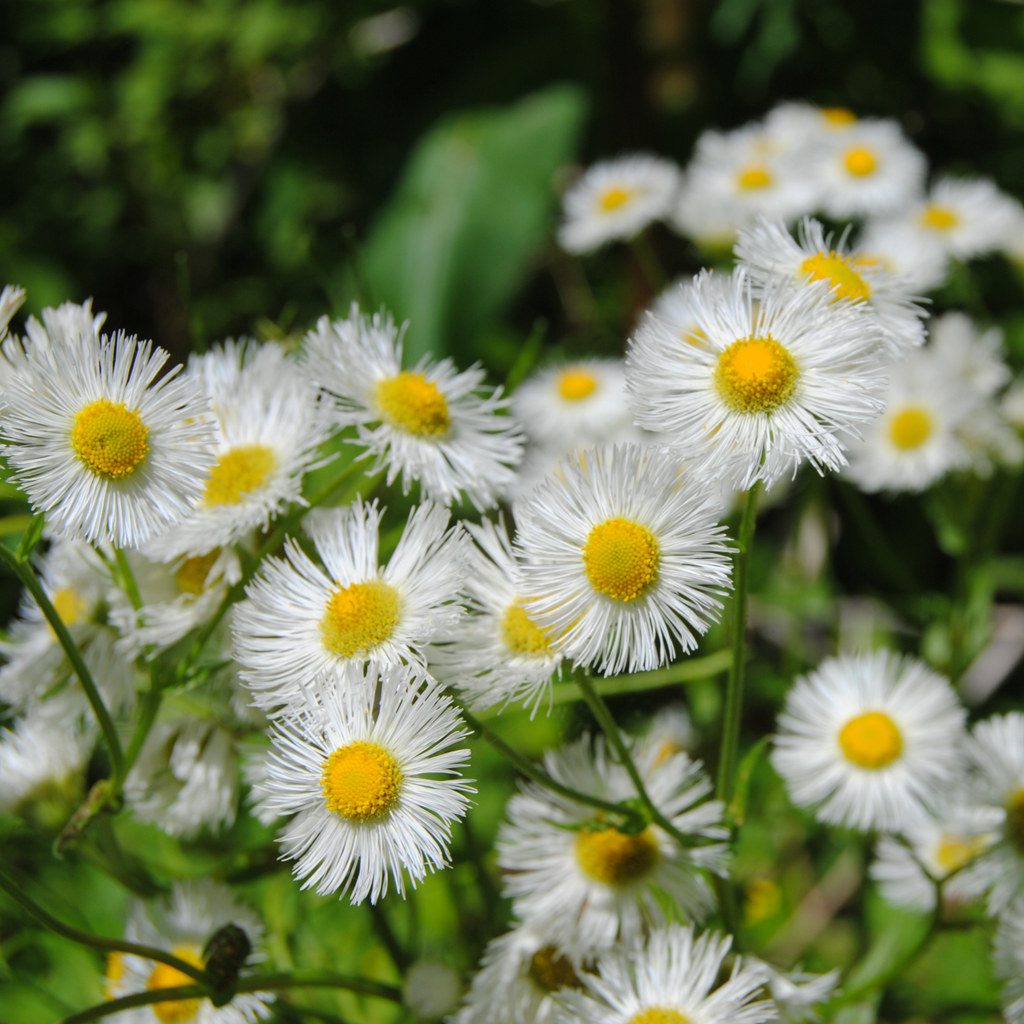 FREE Wallpapers for iPad Wild flowers Spring 1024x1024