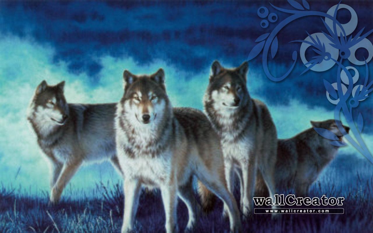 1280x800 wallpaper pack: Wolf Pack Wallpaper