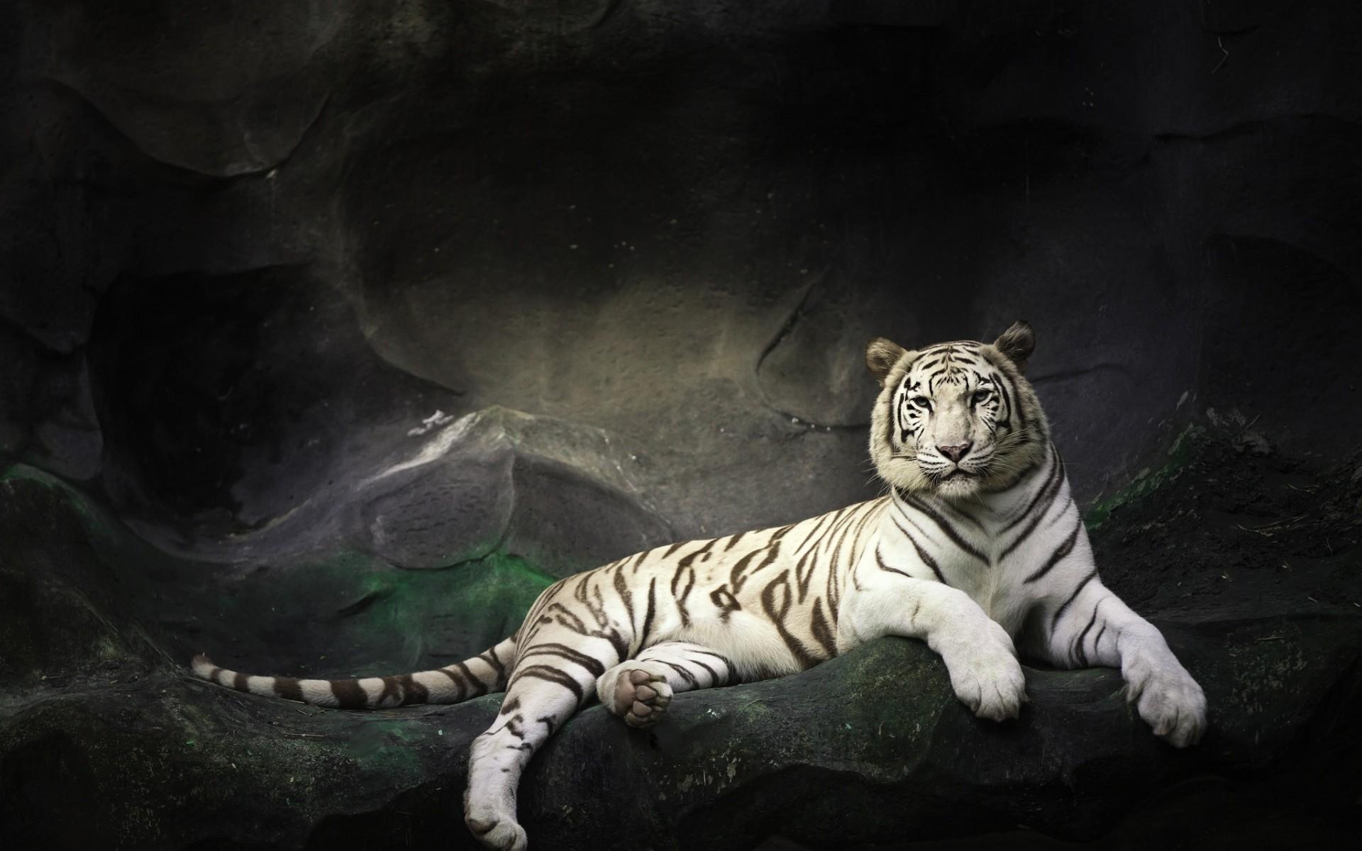 wallpaper white tiger desktop hd snake wallpaper dangerous hd eastern 1920x1200