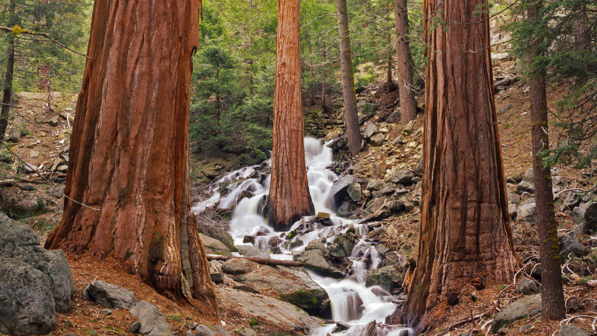 Sequoia National Park HD Wallpaper   HD Wallpapers Backgrounds of Your 1920x1080