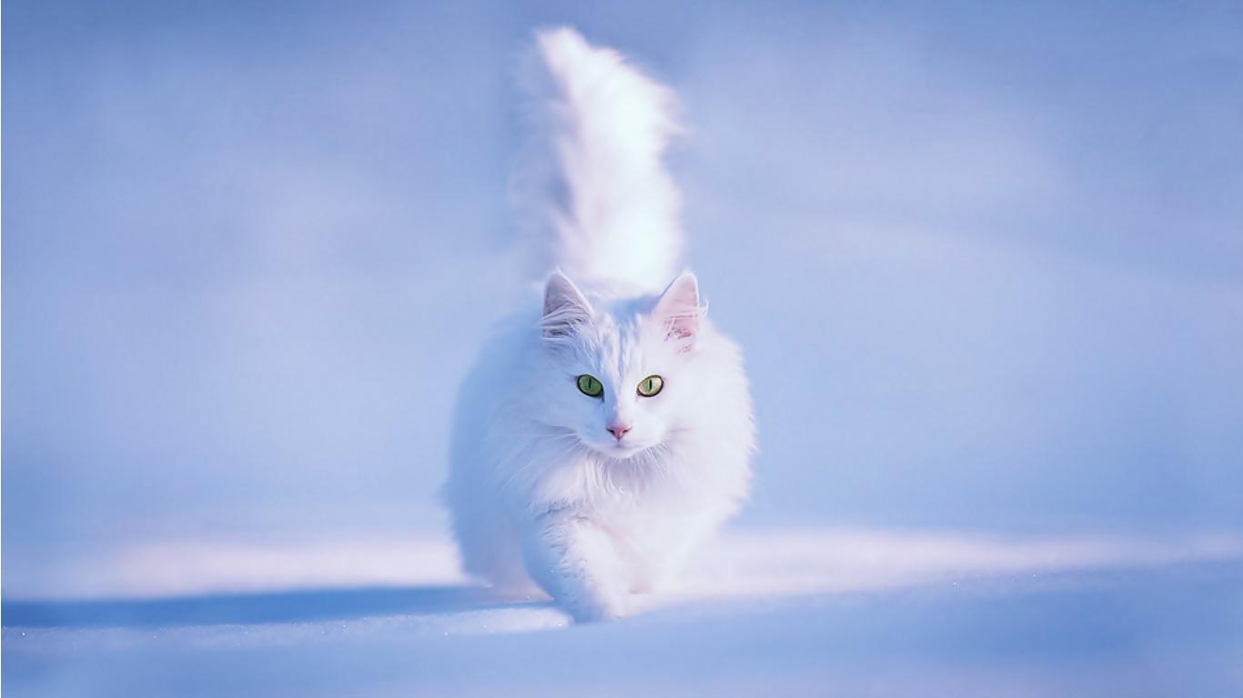 animals, Cat, Snow, Winter Wallpapers HD / Desktop and ...  |Winter Scenes With Cats