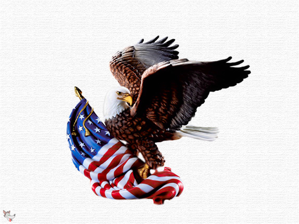 Eagle Usa High Quality Wallpaper Best HD Wallpapers 1024x768
