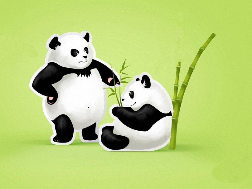 Cute panda bears wallpaper   ForWallpapercom 808x606