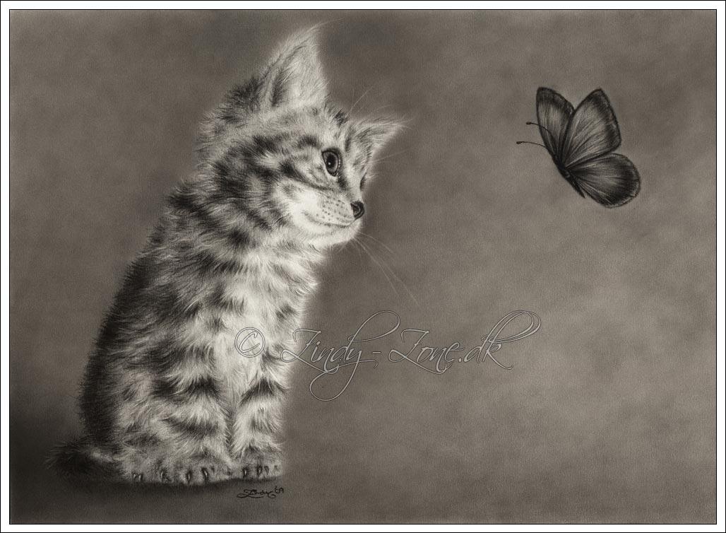 Cats Butterfly Wallpaper 1028x754 Cats Butterfly Animals Artwork 1028x754