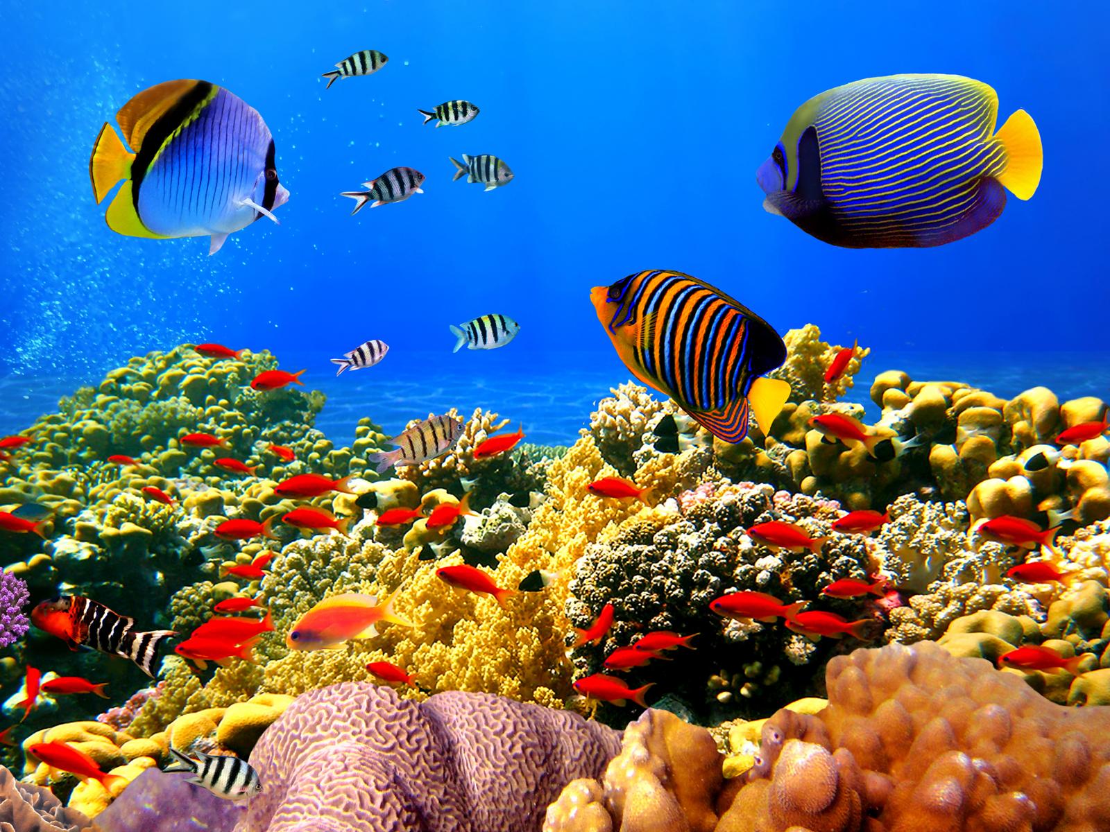 blue ocean wallpaper with fish wallpapersafari