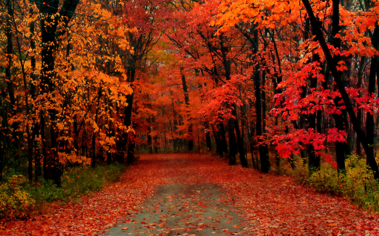 Autumn Trees Wallpaper Widescreen Viewing Gallery 1280x800px 1280x800