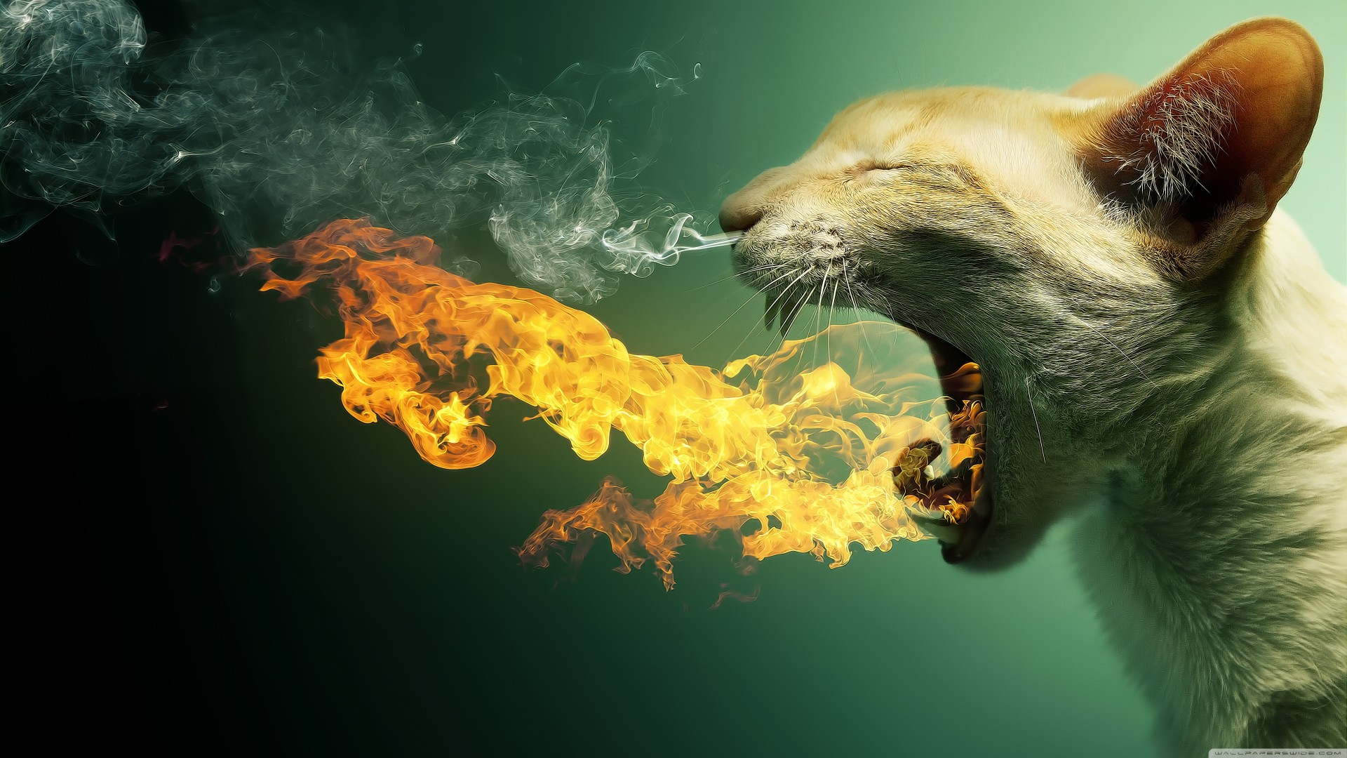 Flaming Cat Funny Creative Animal Wallpaper HD Wallpapers 1920x1080