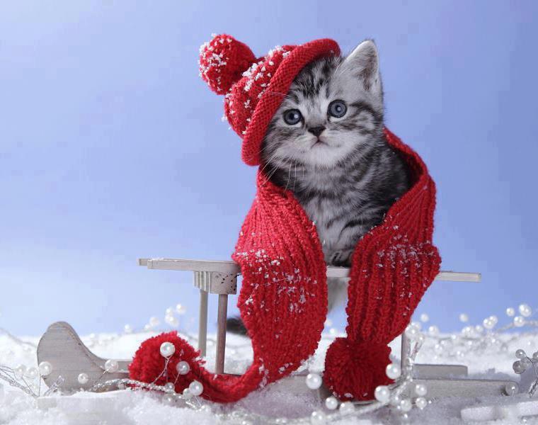Image result for season's greetings snow globe beautiful