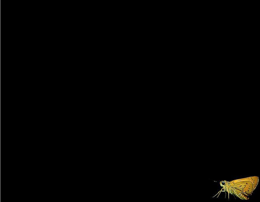Iphone wallpaper emo - Butterfly Black Background Wallpapersafari