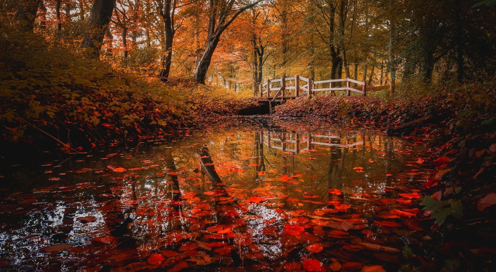 Leavescool Images Forest Fallautumn Bridge Landscape Leaf 2048x1126
