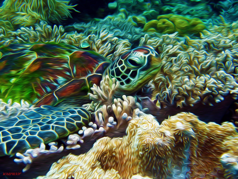 sea turtle iphone wallpaper wallpapers - Trending Wallpaper