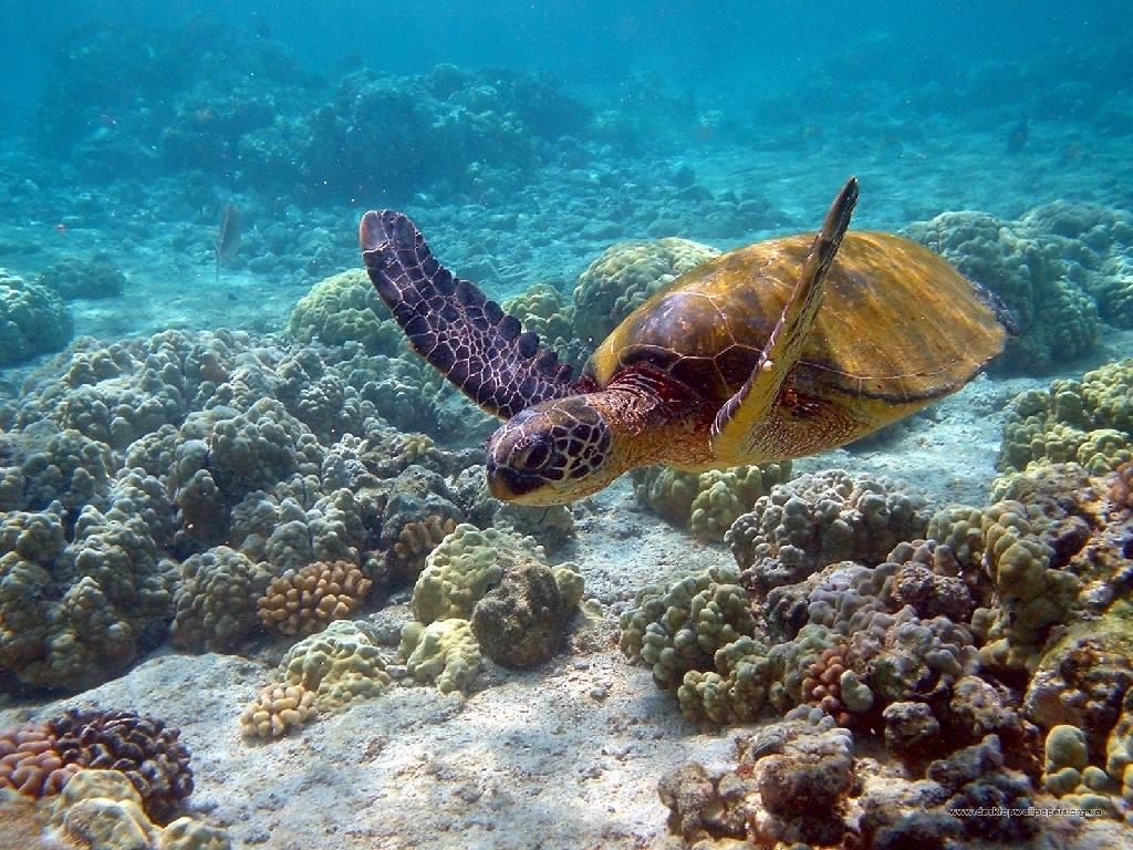 Sea Life   Sea Life Wallpaper 32310931 1024x768