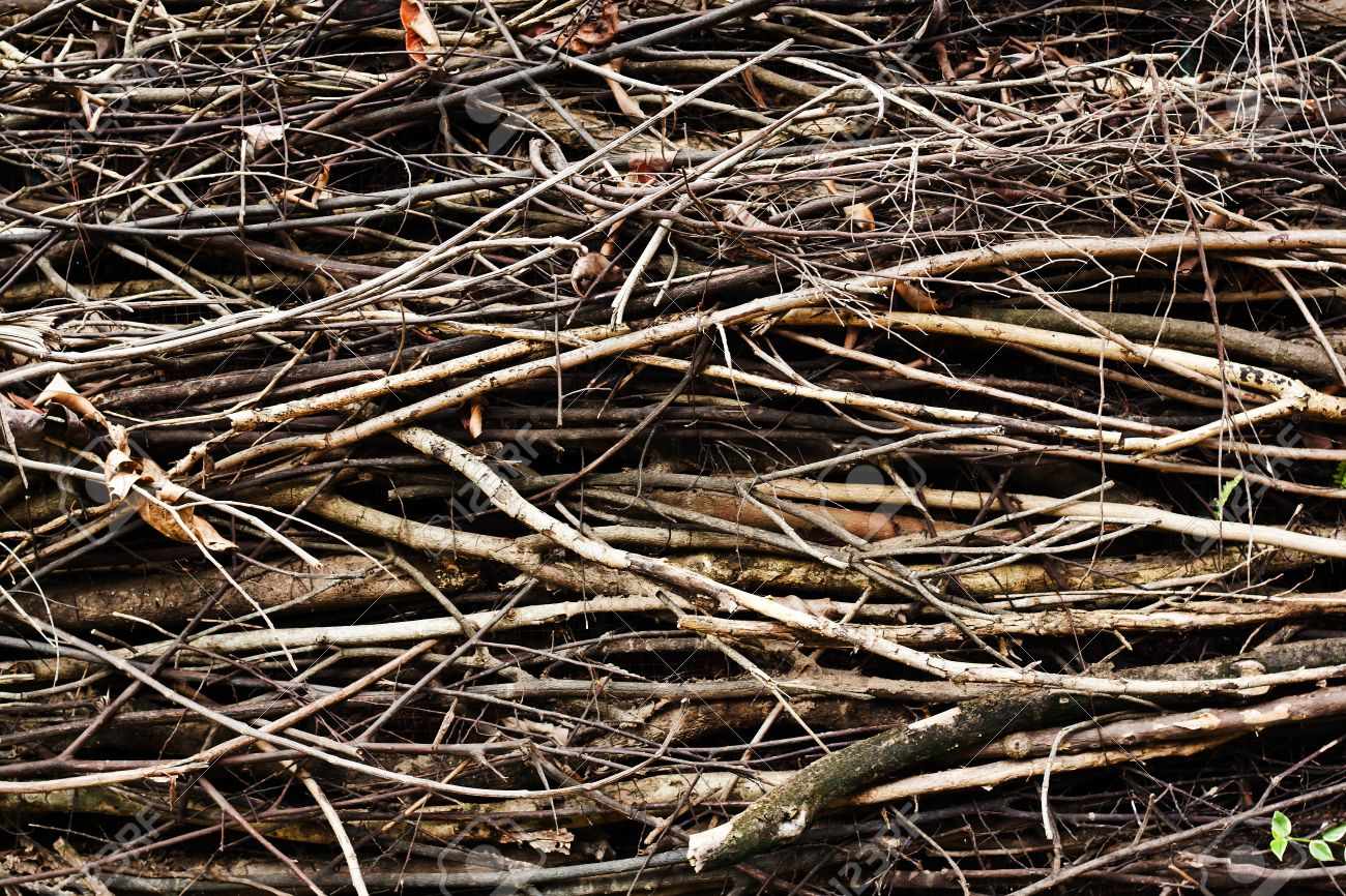 Twigs Texture For Background Stock Photo Picture And Royalty 1300x866