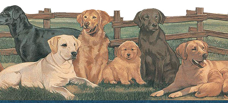 Details about LABRADOR DOGS and PUPPYS Wallpaper Border TA39037DB 770x350