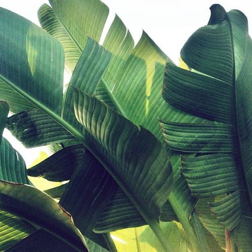 Palm Print Tumblr 500x500