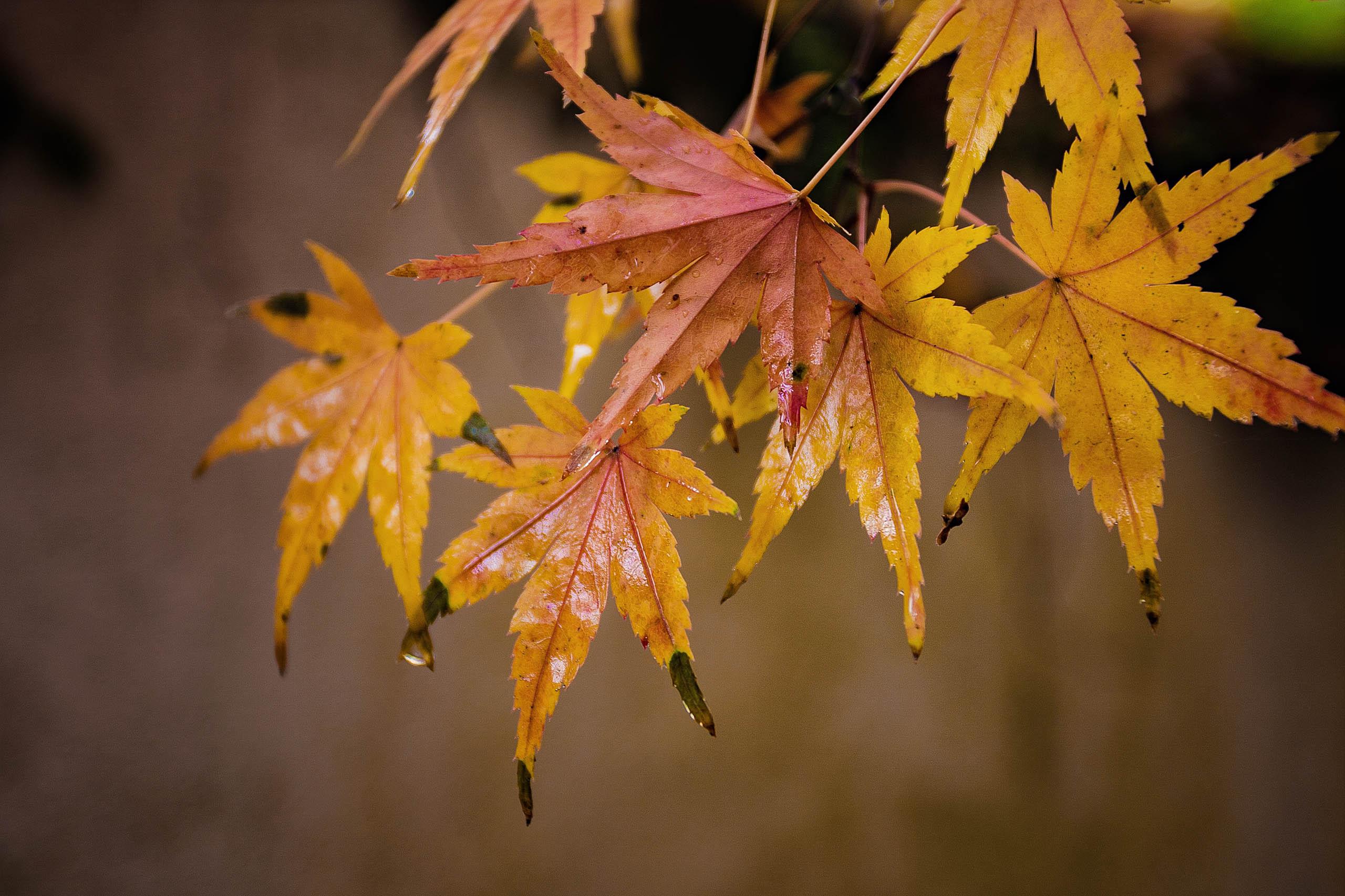 infoautumn road green starting to fall leafs desktop wallpaperhtml 2560x1706