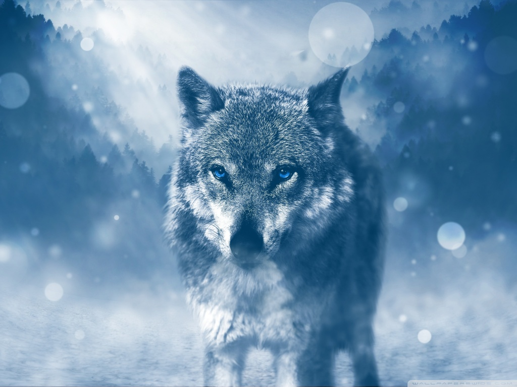 Wolf Winter 4K HD Desktop Wallpaper for 4K Ultra HD TV Wide 1024x768