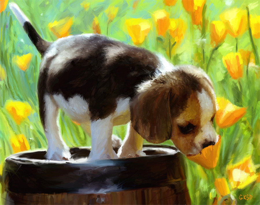 Spring Puppy Backgrounds Spring puppy by gabriellekelly 900x711