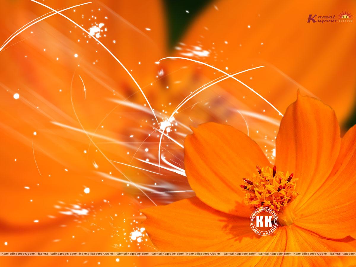 Wallpapers Best Orange Color Pictures Orange Color Desktop Wallpaper 1200x900