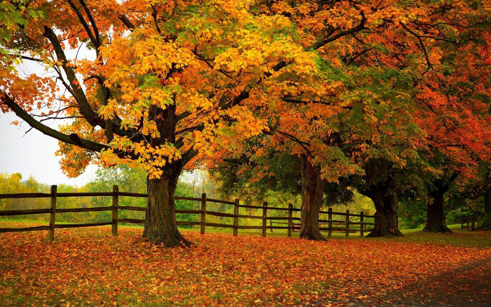 Autumn Trees Forest Park 4K Ultra Hd Wallpaper   HD Wallpapers 1680x1050