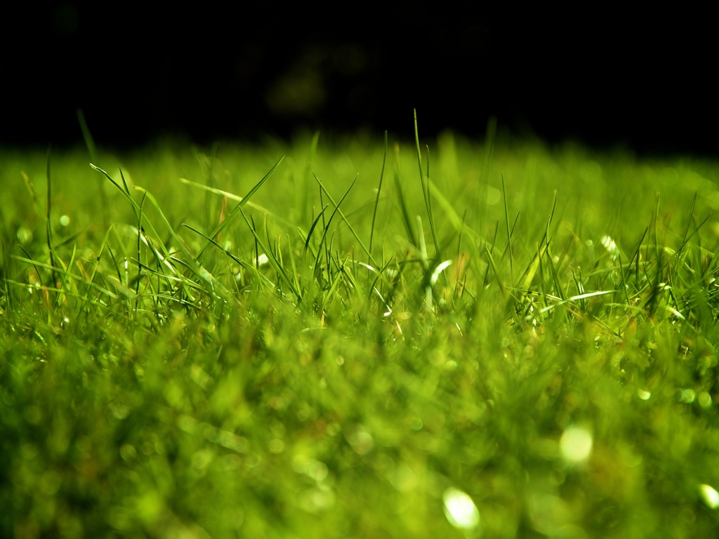 grass field backgrounds for powerpoint sports ppt templates 1024x768