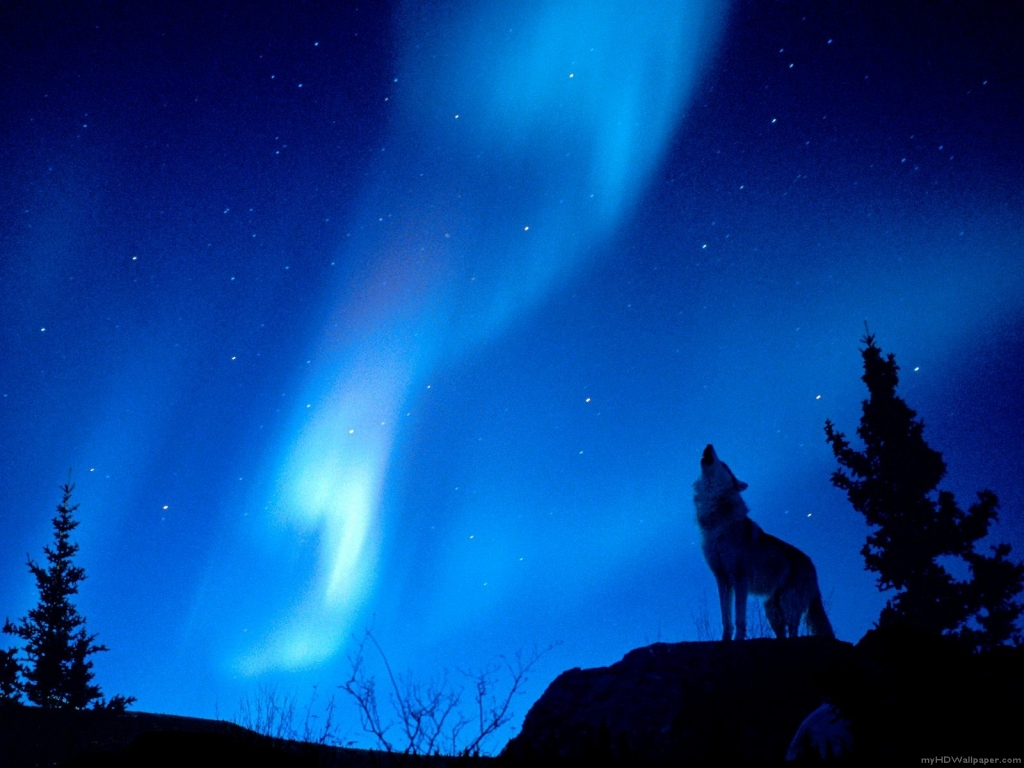 Wolf Howling, Aurora Borealis 1024x768 STANDARD Image Animals / Wild ...