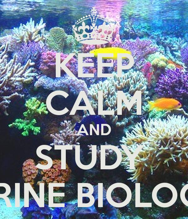 Marine Biology Wallpaper And study marine biologist 600x700
