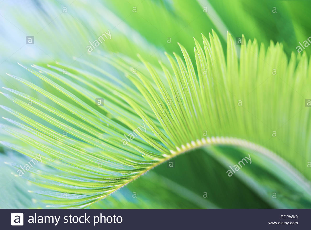 Natural blurred greenery tropic background with palm leaf Stock 1300x964