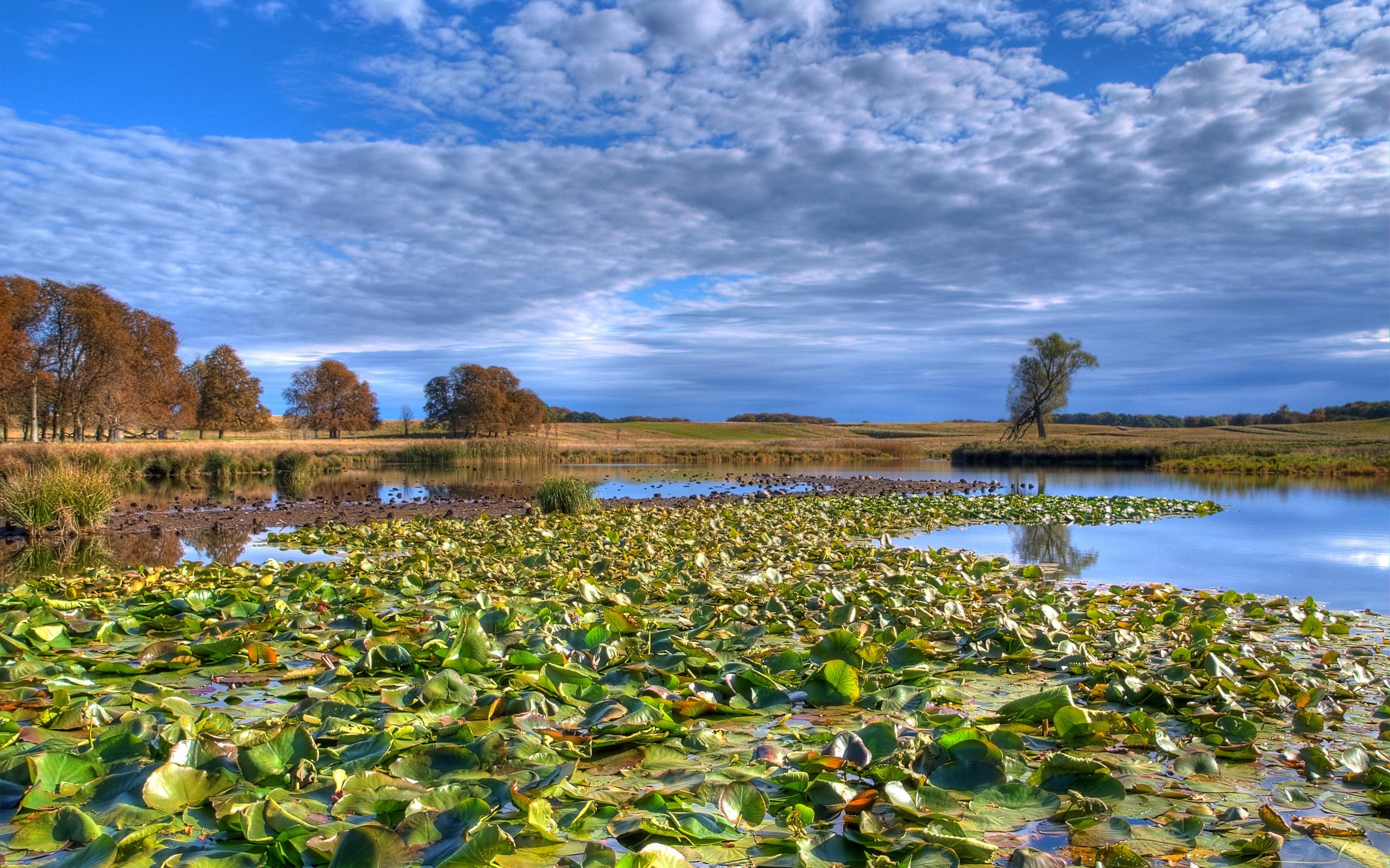 кувшинки озеро небо лес  № 1264559  скачать