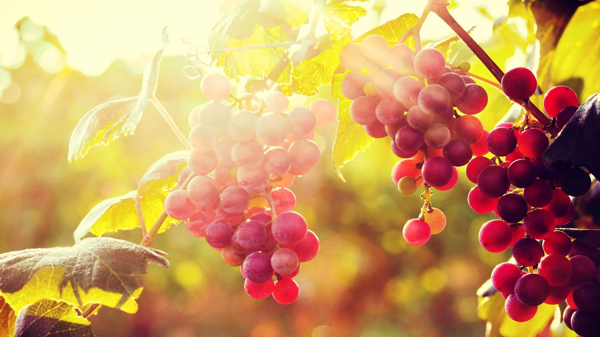 Sun With Grapes Desktop Background HD Wallpapers Widescreen 1920x1080