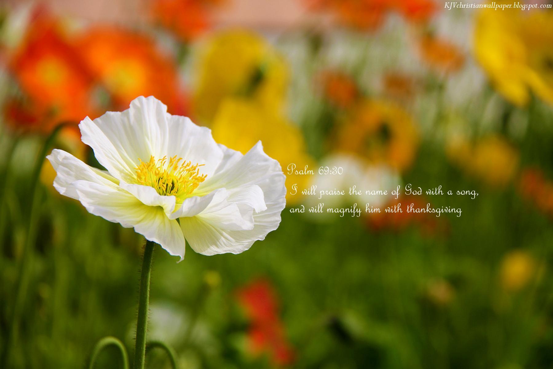 King Name Wallpaper   Christian Desktop Backgrounds Spring 1799x1200