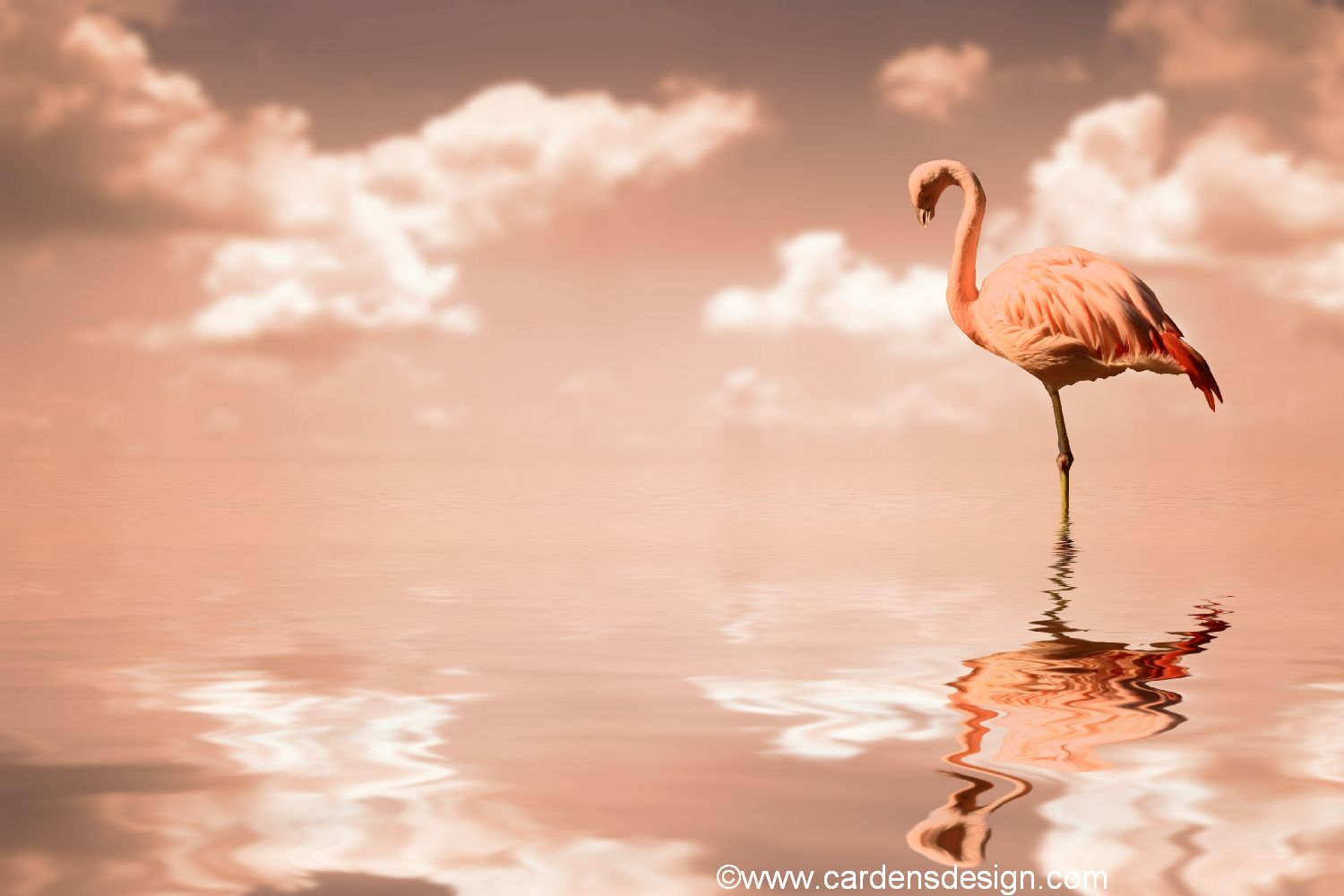 Free Download Flamingo Wallpaper My Wallpaper Home 1500x1000 For