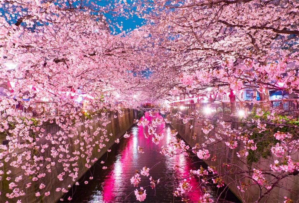 Laeacco Dusk Light Drain Cherry Blossoms Scenic Photography 1000x681