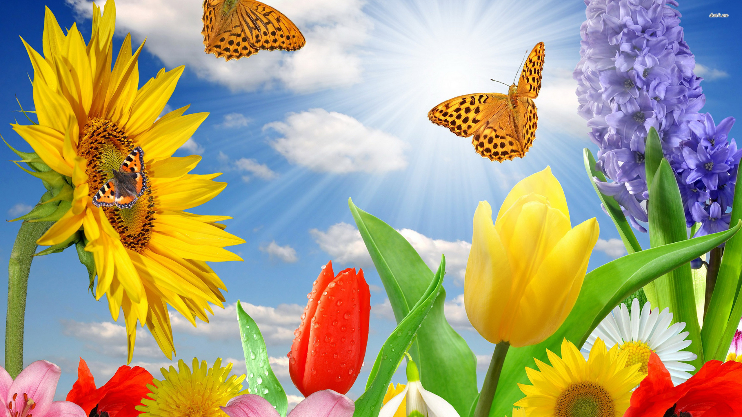 [41+] Spring Butterflies Wallpaper on WallpaperSafari