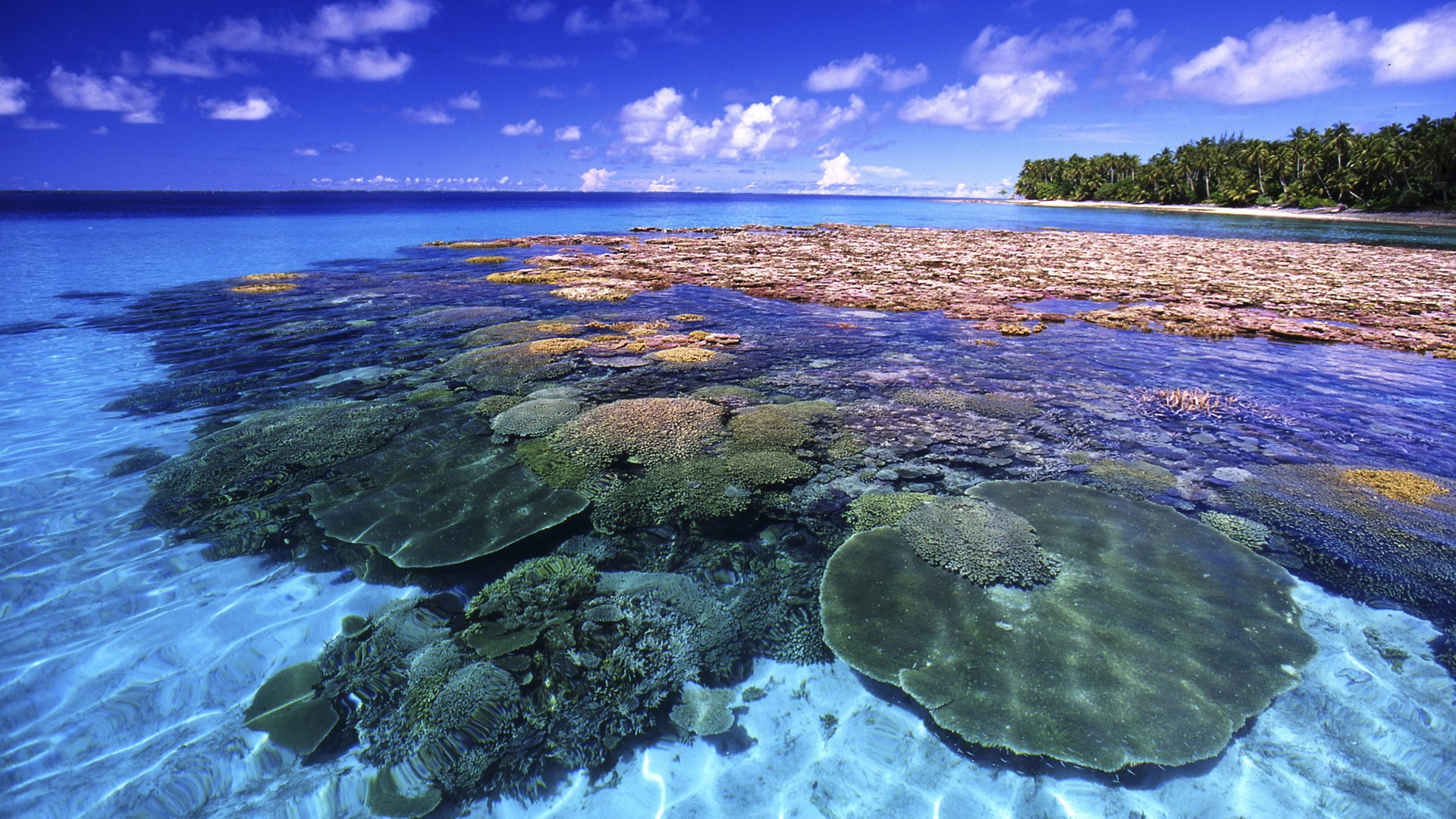Great Barrier Reef Queensland Australia Beautiful Photos and 1920x1080
