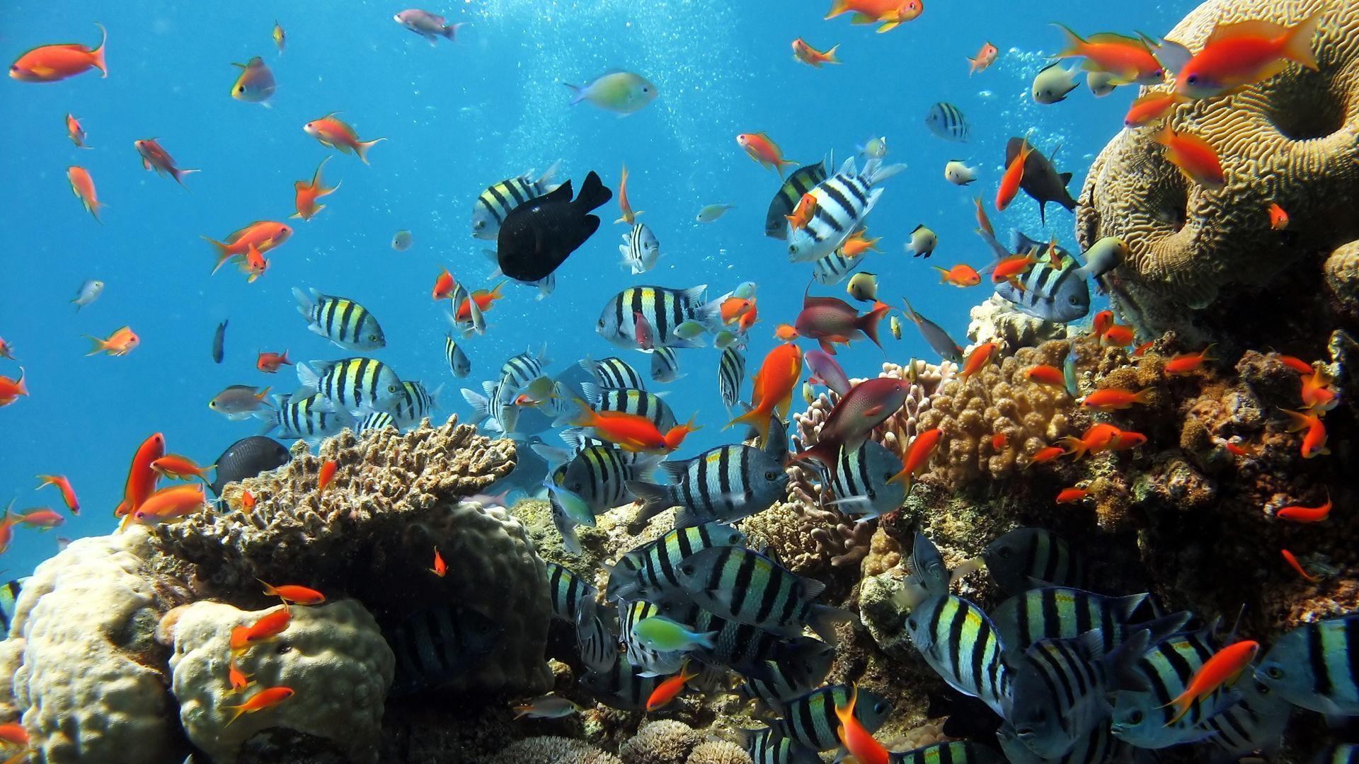 50 Underwater Widescreen Desktop Wallpapers   Download at 1920x1080