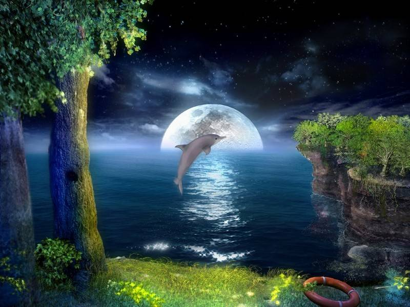 3D Jumping Dolphins Screensaver 10 download for Windows 8 800x600