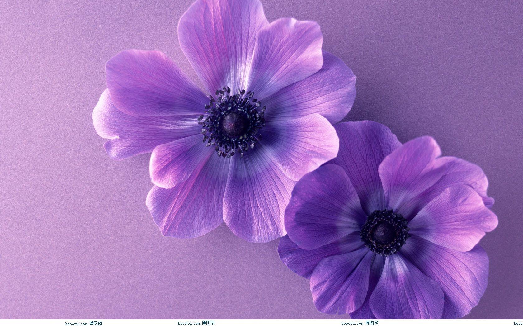 hd wallpapers purple flower wallpaper border desktop flowers 1680x1050 1680x1050