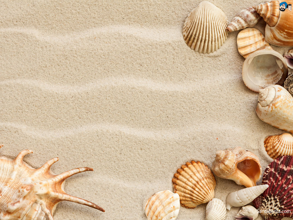 Wallpaper Seashells 1024x768
